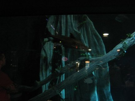 """The Deep"" aquarium , in Hull"