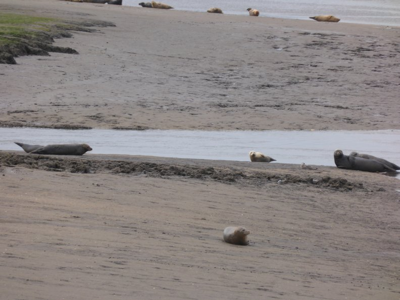 Seals At Seal sands 0019