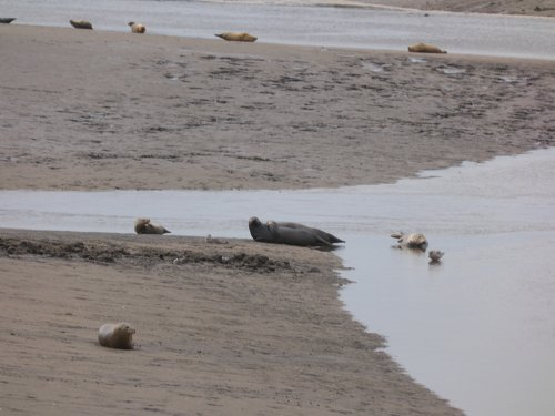 Seals At Seal sands 0023