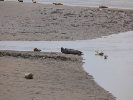 Seals At Seal sands 0024