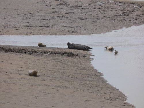 Seals At Seal sands 0025