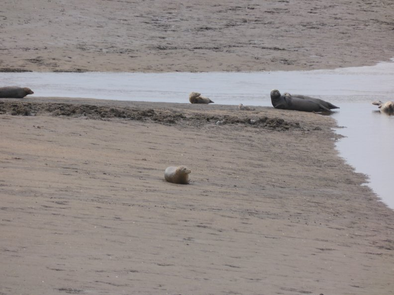 Seals At Seal sands 0026