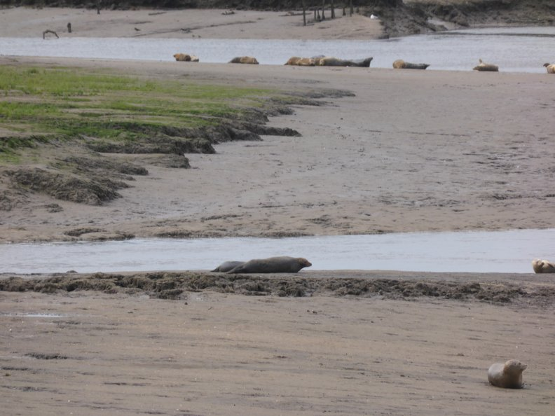 Seals At Seal sands 0027