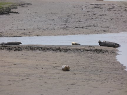 Seals At Seal sands 0028