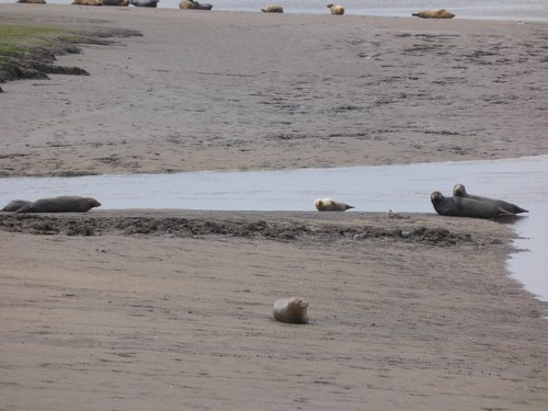 Seals At Seal sands 0029