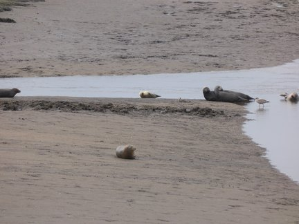 Seals At Seal sands 0030