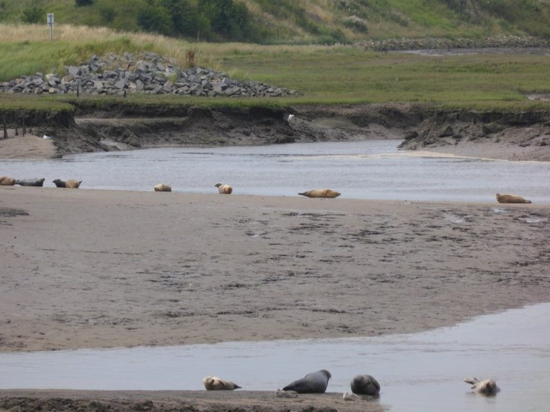 Seals At Seal sands 0033
