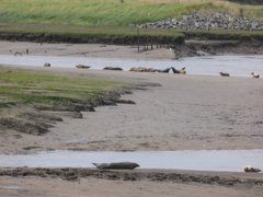 Seals At Seal sands 0034