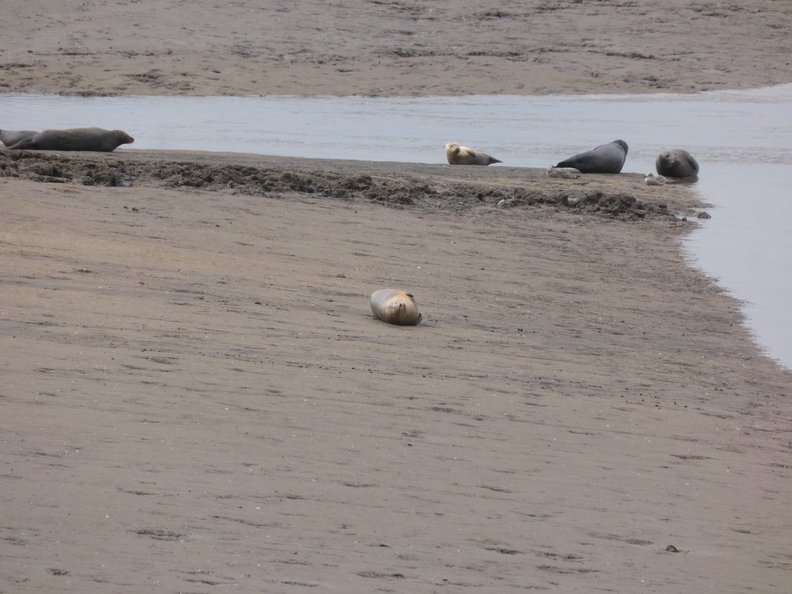 Seals At Seal sands 0038