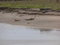 Seals At Seal sands 0041