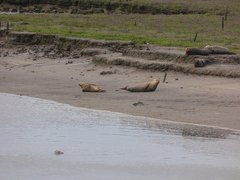 Seals At Seal sands 0044