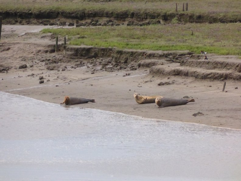 Seals At Seal sands 0049
