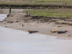 Seals At Seal sands 0053