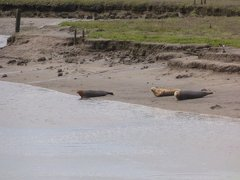 Seals At Seal sands 0054