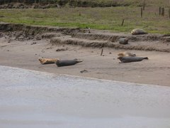 Seals At Seal sands 0057