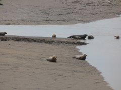 Seals At Seal sands 0062