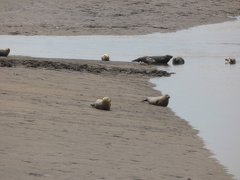 Seals At Seal sands 0063