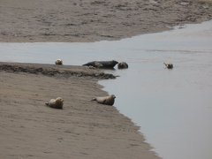 Seals At Seal sands 0065