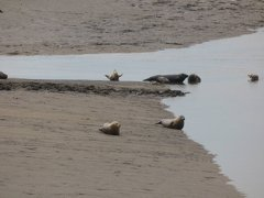 Seals At Seal sands 0066