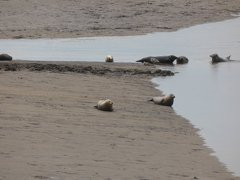 Seals At Seal sands 0069