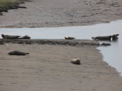 Seals At Seal sands 0073