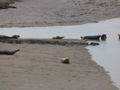 Seals At Seal sands 0075