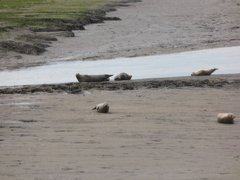 Seals At Seal sands 0078