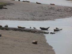 Seals At Seal sands 0086