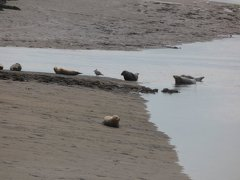 Seals At Seal sands 0087