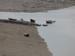Seals At Seal sands 0088