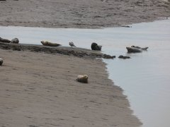 Seals At Seal sands 0090