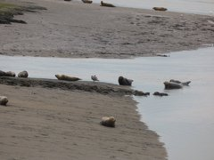 Seals At Seal sands 0093