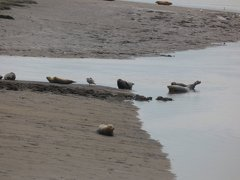 Seals At Seal sands 0094