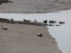 Seals At Seal sands 0098